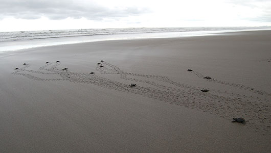 Turtle Protection programs in Costa Rica