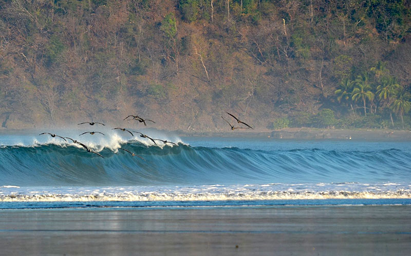 Waves in Jacó Beach are perfect for learning