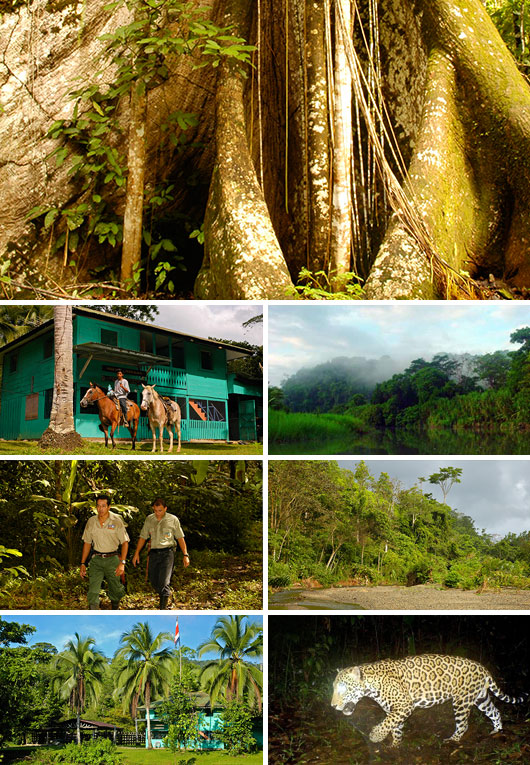 Volunteering in Piedras Blancas National Park, Costa Rica