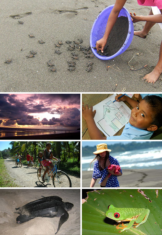 Turtle Protection Program volunteering in Gandoca-Manzanillo, Costa Rica