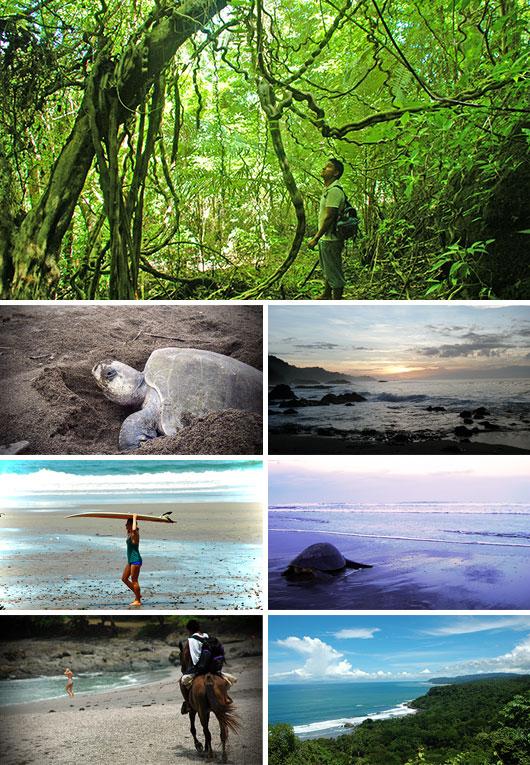 Turtle Protection Program volunteering in Montezuma, Costa Rica