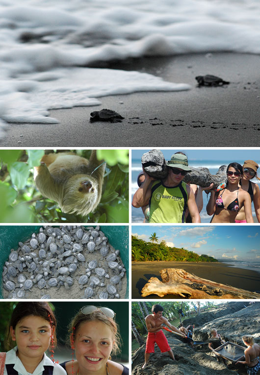 Turtle Protection Program volunteering in Matapalo, Costa Rica