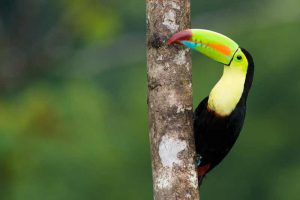 Toucan from Costa Rica, our best symbol!